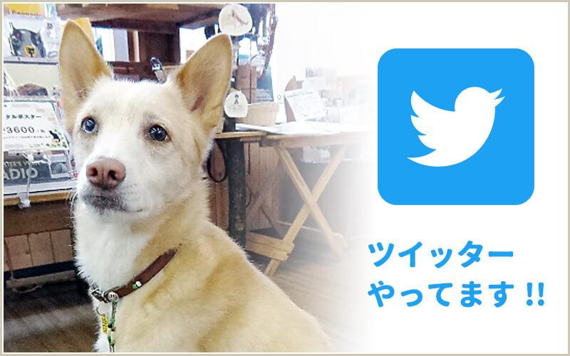 たまポチ|八王子|Twitter